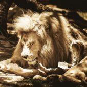 mammal-3128440_1920